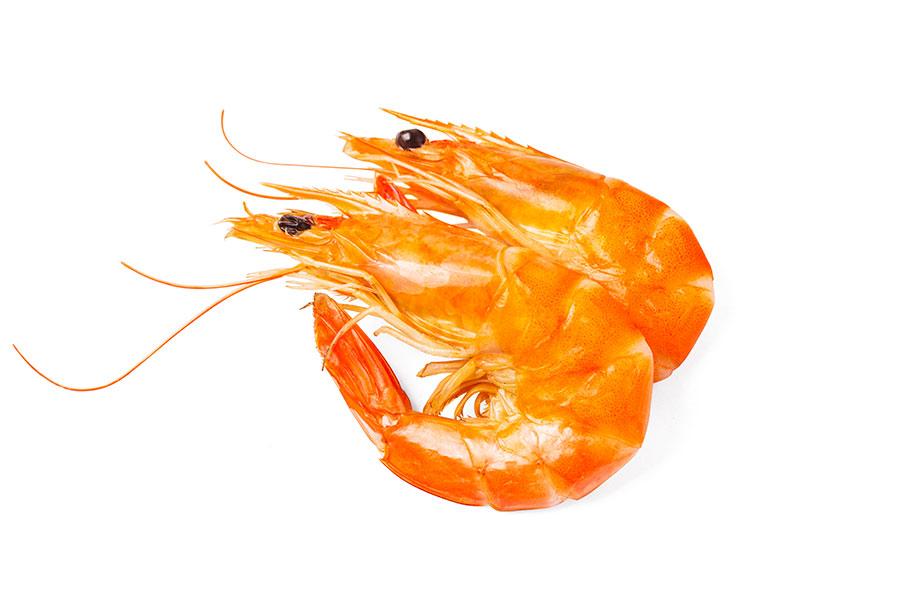 Il pescato del giorno | Il Mare di Felice